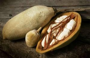 le fruit du baobab, pain de singe biologique
